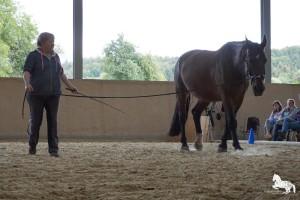 Lysander (3)